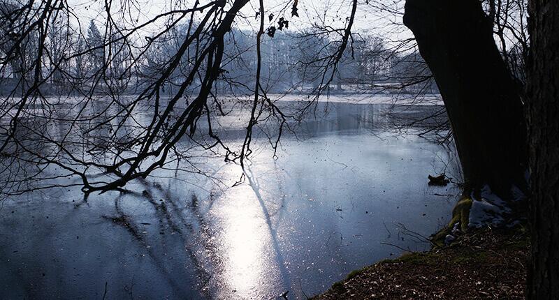 Der Hasensee vom Ufer unter Bäumen, die Sonne reflektiert im Wasser