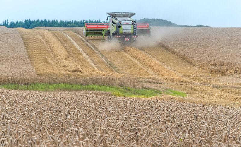 Eine Landmaschine fährt über ein Getreidefeld davon