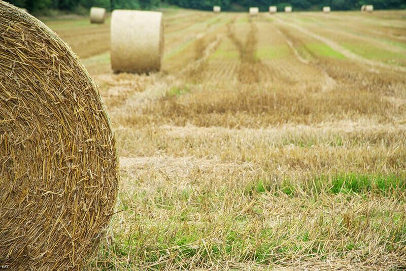 Strohballen liegen auf einem abgeernteten Feld